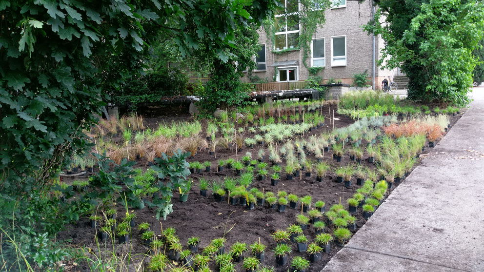 Gräser Garten schaugarten für natursteine und gräser in berlin