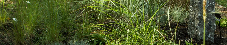150 Sorten Gräser und Natursteine