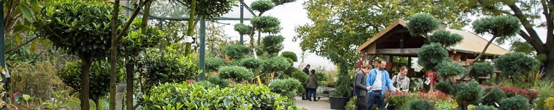 Pflanzenverkauf vor der historischen Packhalle mit Großbonsais für den Garten