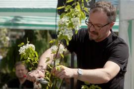 Geschäftsführer Holger Zahn beim Vorführen des Obstgehölze-Schnitts