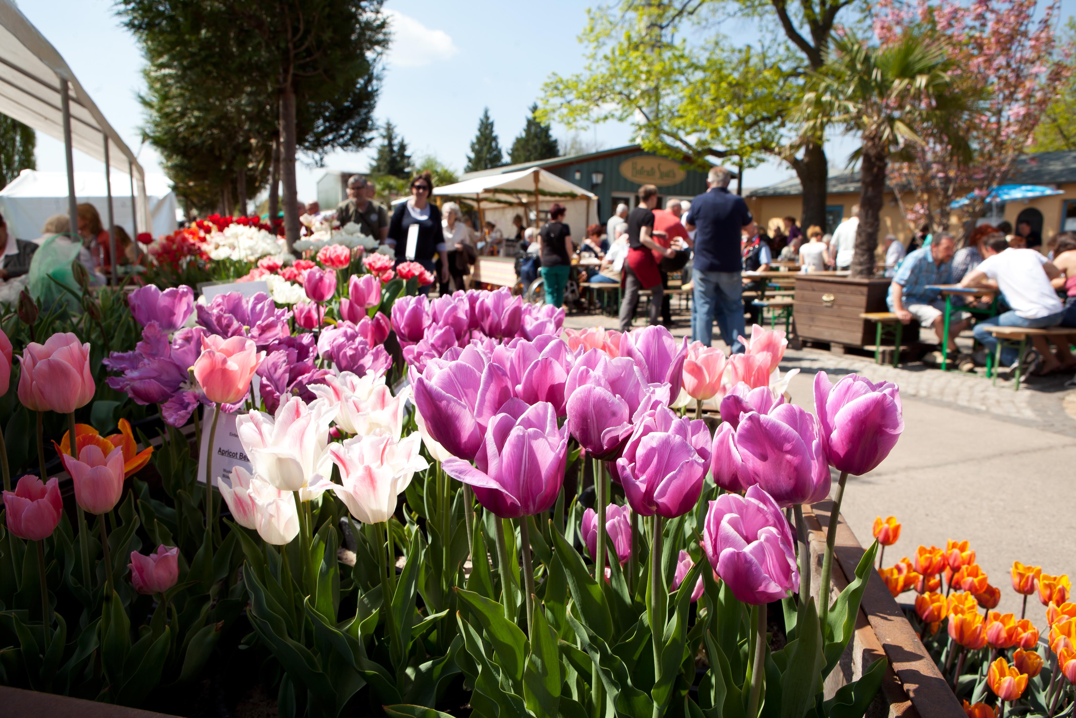 Späth'er Frühling: Tulpensortenschau der Späth'schen Baumschulen 7,05 MB