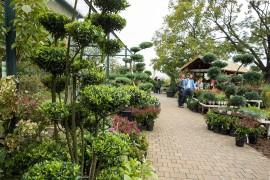 Kiefern, Wacholder, Ilex, Eiben und auch eine Sternmagnolie als Bonsai für den Garten