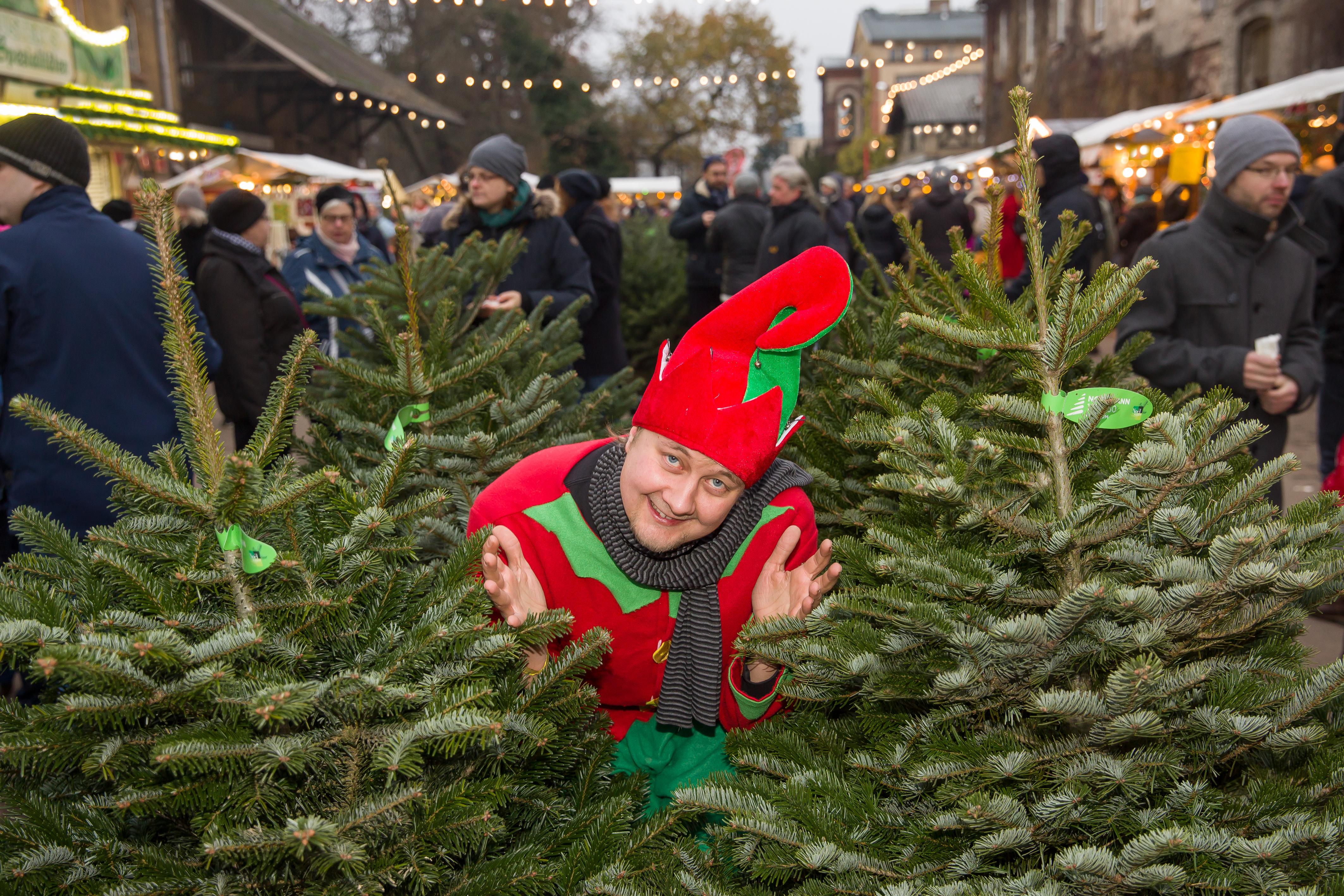 Weihnachtswichtel inmittten von Tannenbäumen auf dem historischen Hof