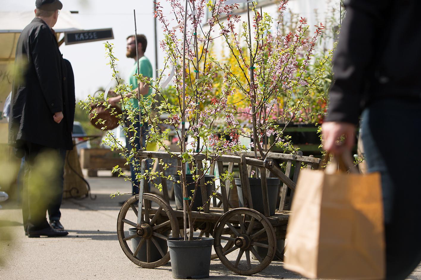 Blühende Gehölze beim Saisonstart in den Späth'schen Baumschulen