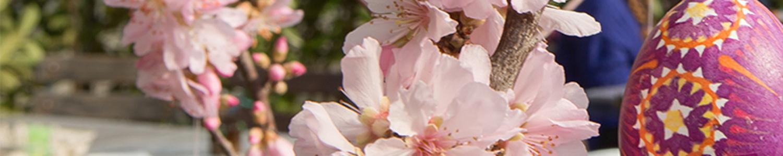 Saisonauftakt mit Frühlingsblühern und Ostereiermalen in sorbischer Tradition