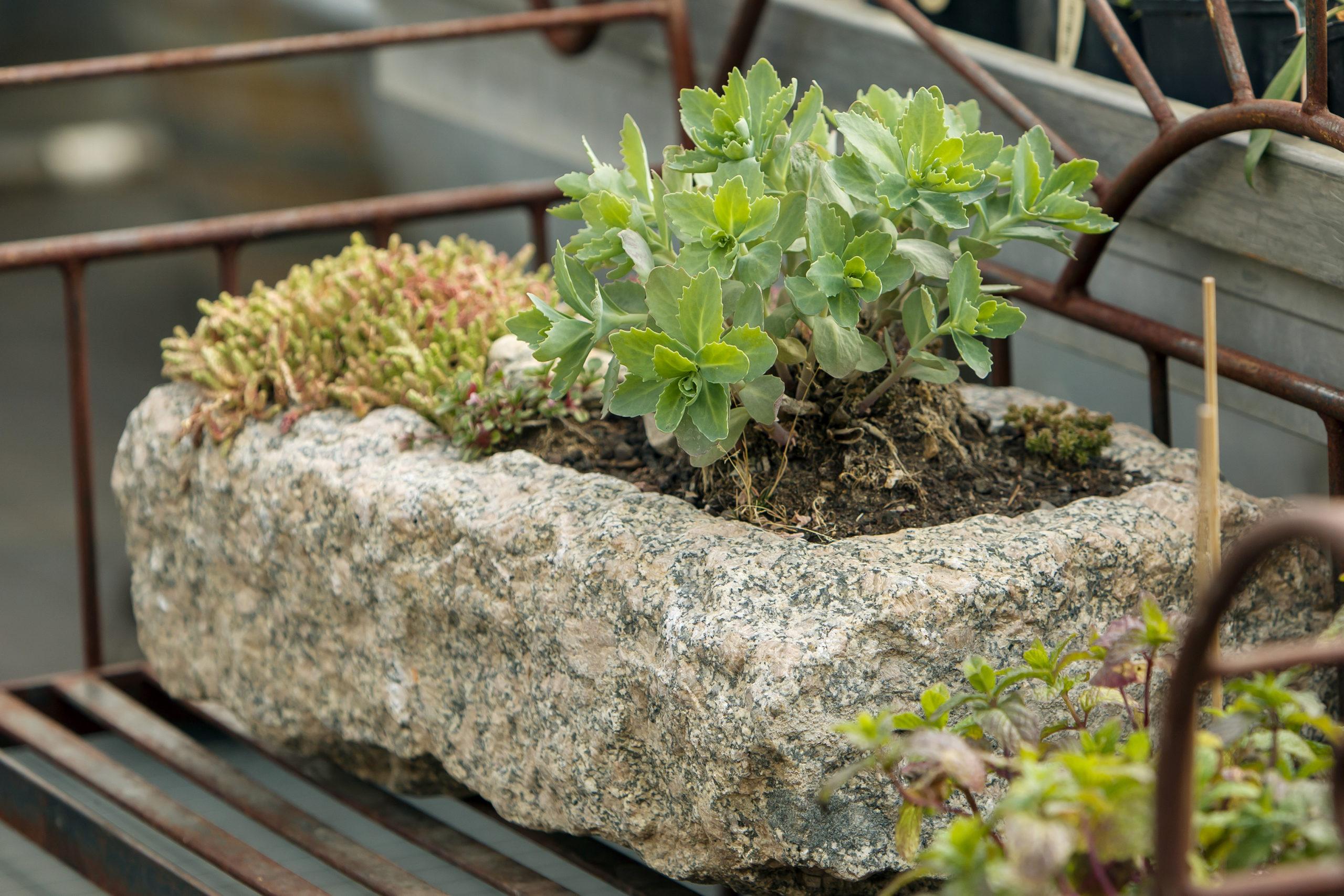 Mini-Kräuterbeet in historischem Sandsteintrog