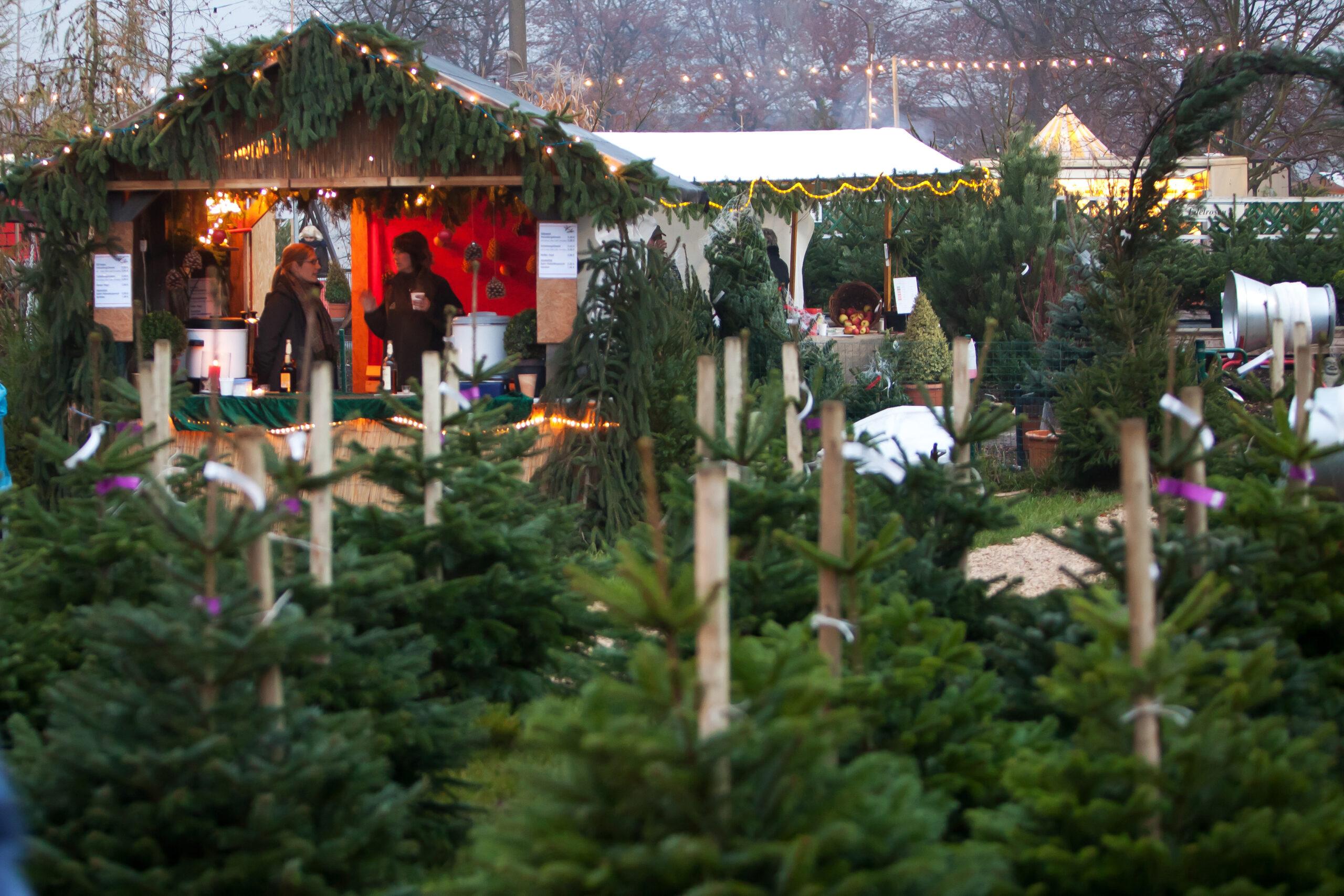Weihnachtsbaumwald mit Glühwein-Verkauf im Hintergrund