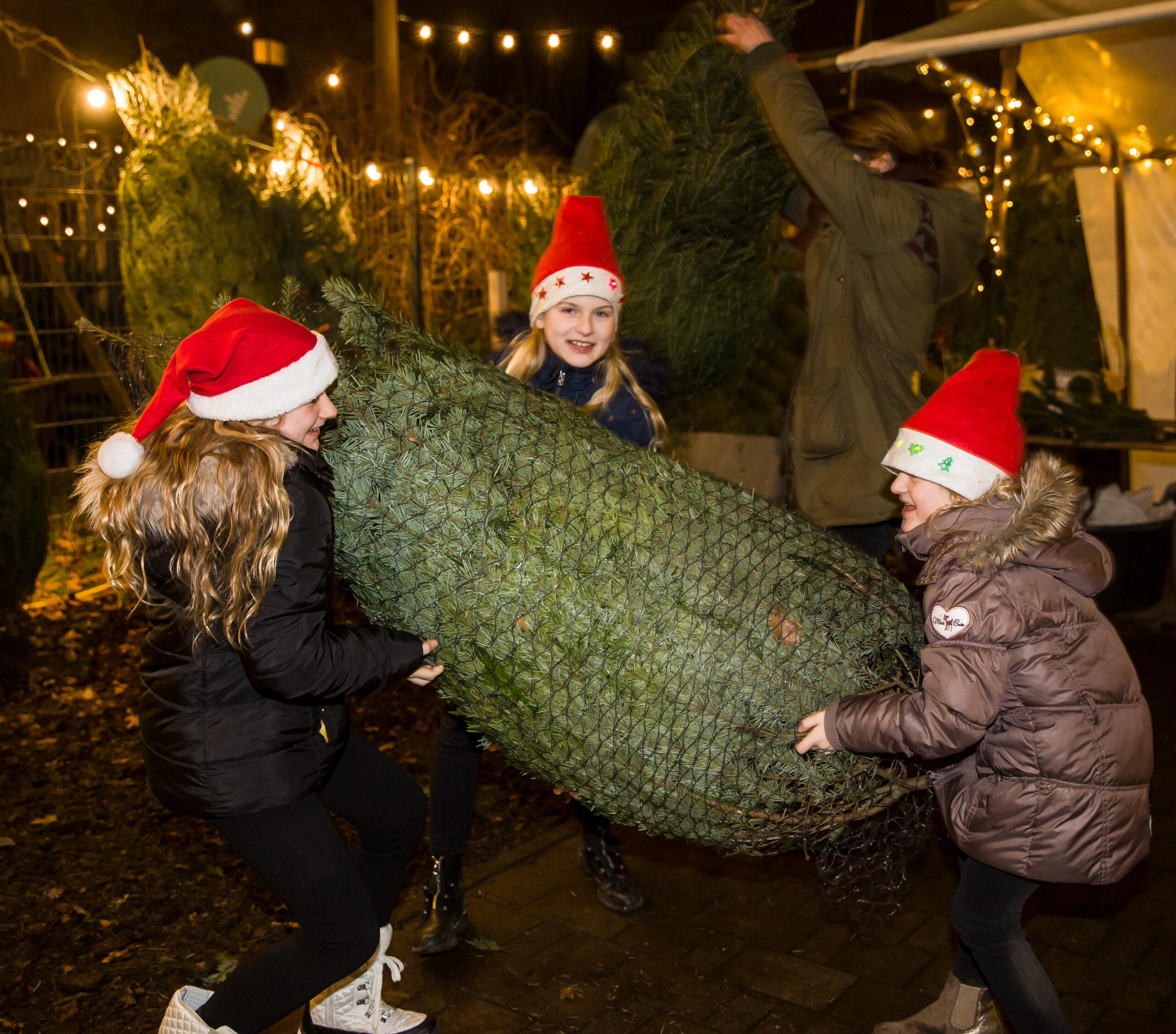 Drei Kinder heben einen großen Weihnachtsbaum an
