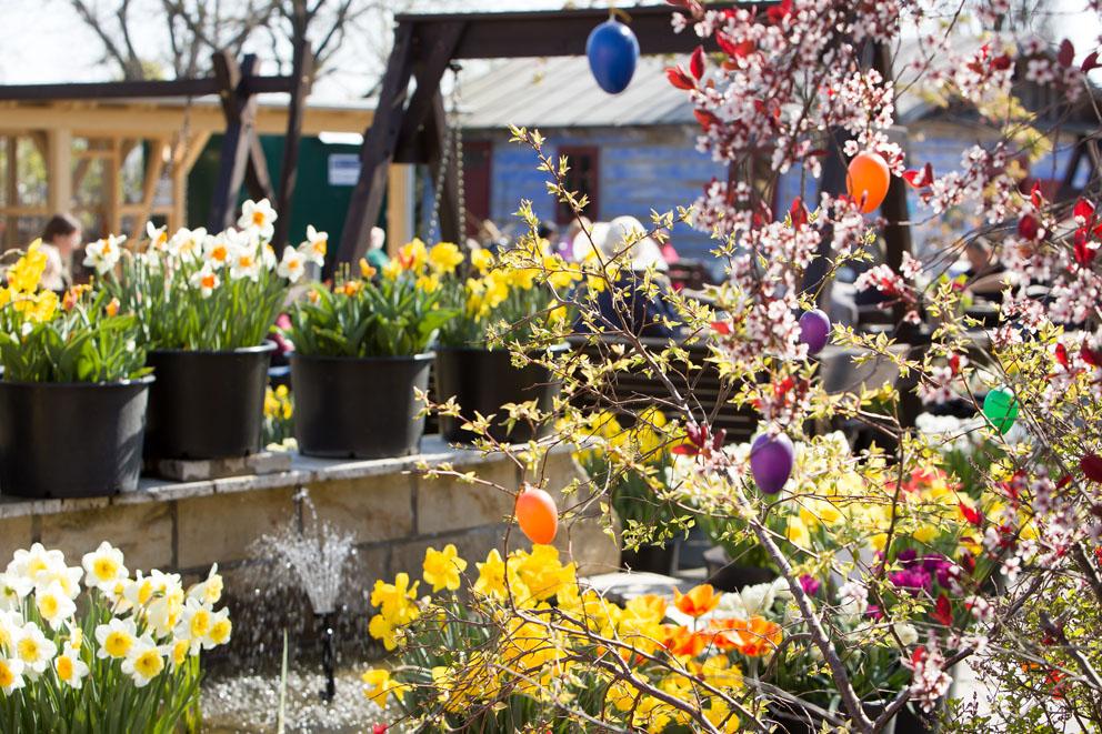 Strauch mit Frühlingsblüten und bunten Eiern, Narzissen im Hintergrund