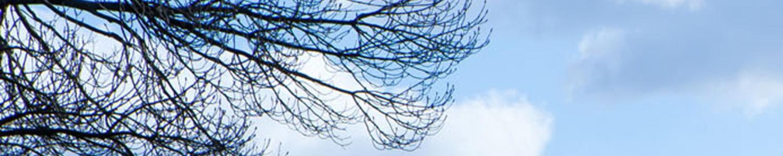 Winterhimmel mit Baum