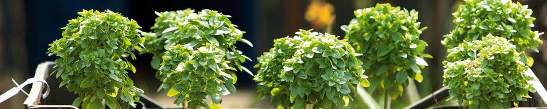 Kleine Pflanzen im Frühling