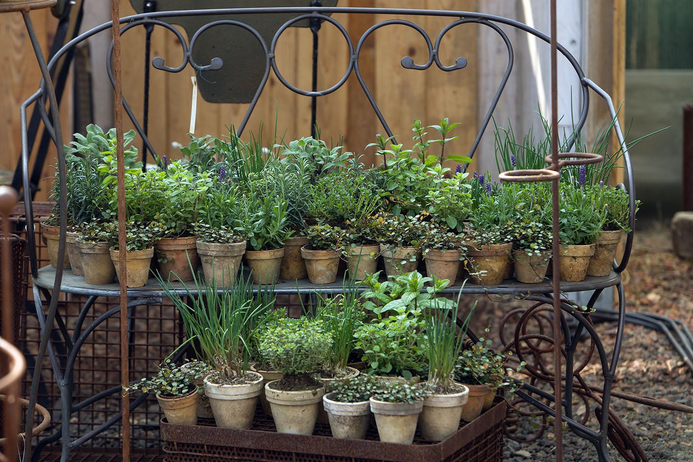 Kräuter in historischen Gärtnertöpfen