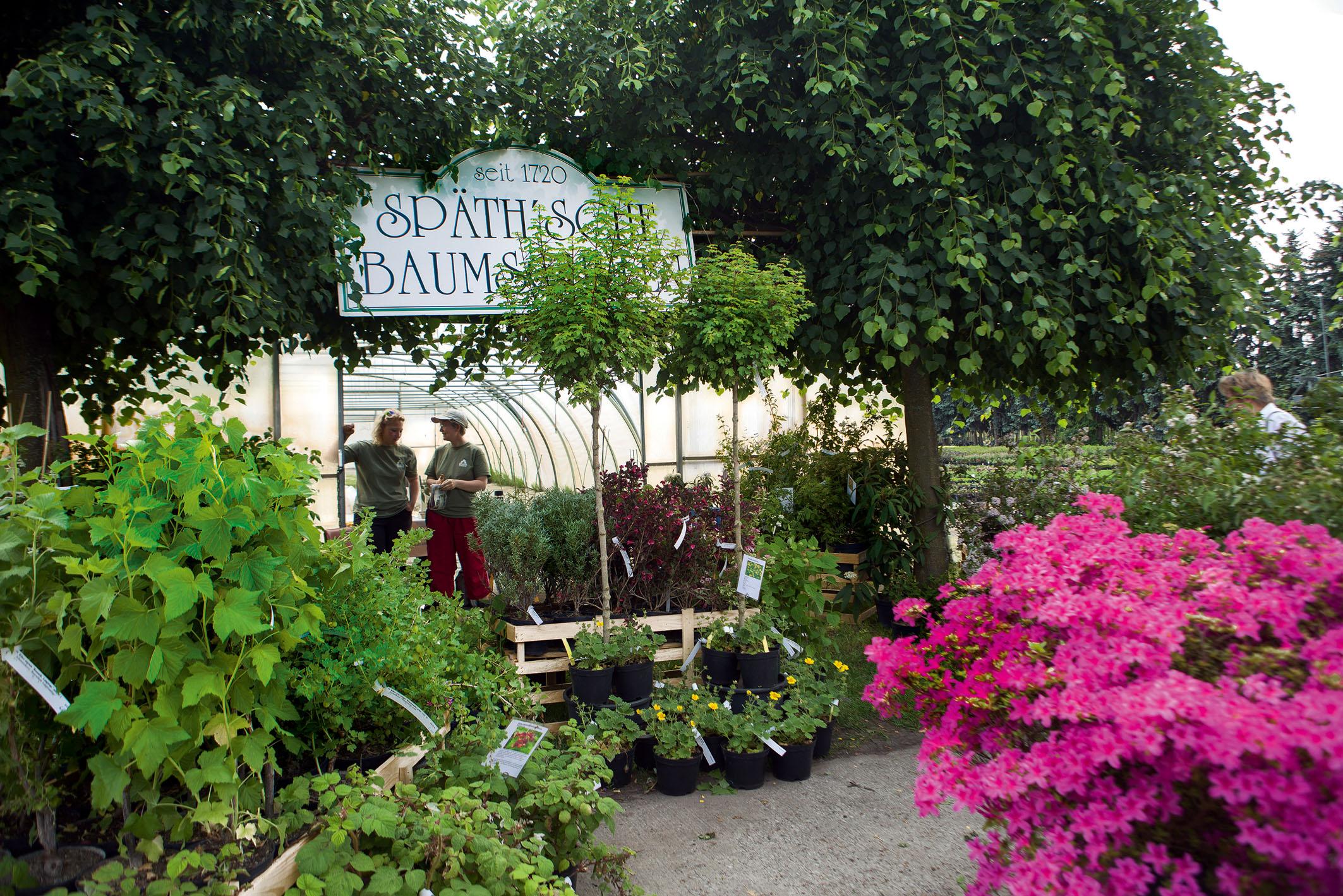 Verkauf von Pflanzen vor großem Gärtner-Folienzelt, Schild mit Aufschrift: Späth'sche Baumschulen - seit 1720
